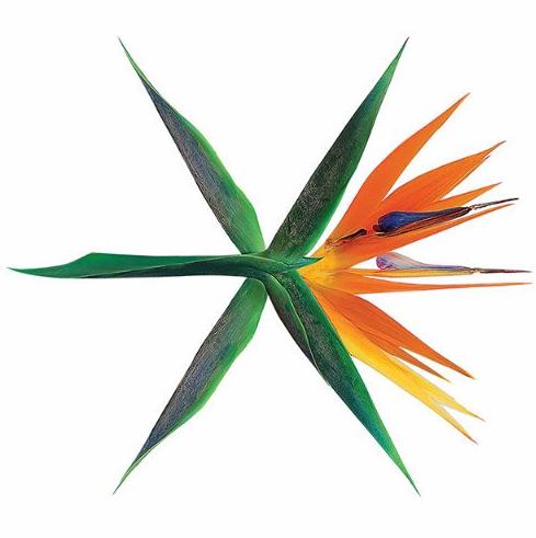 EXO EXOTIC
